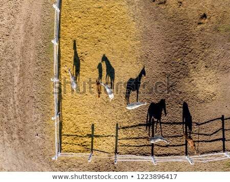 Aerial view from the drone of farm horses grazing and walking on a summer day Stock photo © artjazz