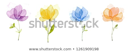 Four sets of blooming flowers Stock photo © colematt