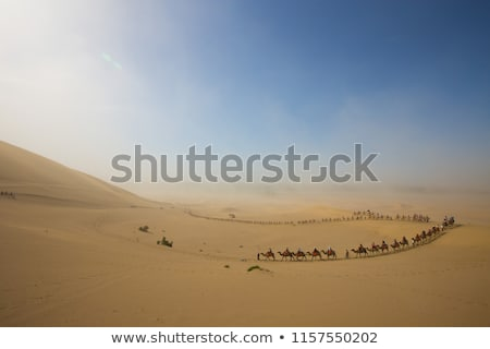 Camel caravan in desert Stock photo © Givaga