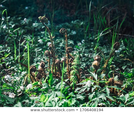 Zöld nap szalag kert fű természet Stock fotó © neirfy