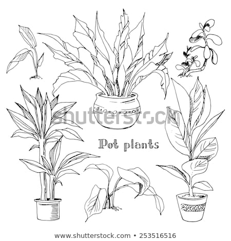 Plant in Pot Black Silhouette Isolated Object Stock photo © robuart