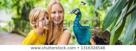 happy family mom and son watching peacock in the park banner long format stock photo © galitskaya