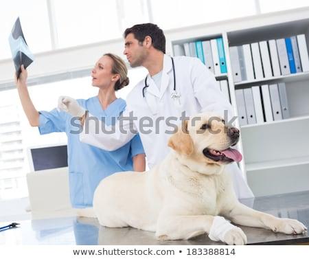 Female veterinarian talking with sick dog Stock photo © Kzenon