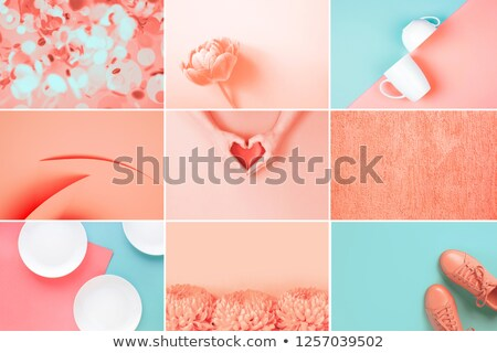 wall of chrysanthemums in living coral color Stock photo © dolgachov