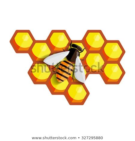 Arılar oturma kovan kareler çalışmak çerçeve Stok fotoğraf © przemekklos