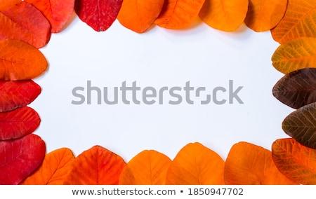 поздравление · форме · желтый · цвета · осень · листва - Сток-фото © Alkestida