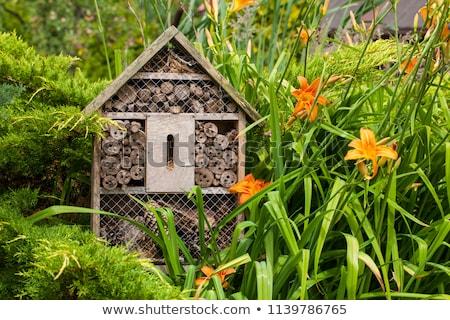 Houten insect hotel onderdak insecten Stockfoto © boggy