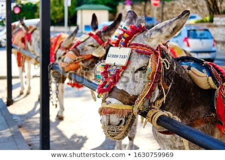 Donkey taxi landmark in Mijas white-washed spanish village. Lot  Stock photo © amok