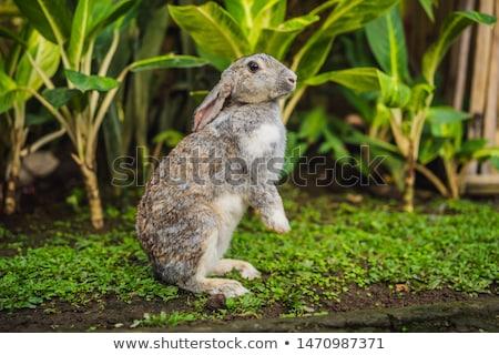 кролик трава косметики испытание животного жестокость Сток-фото © galitskaya