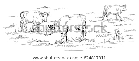 cabeça · vaca · preto · e · branco · grama · olhos · preto - foto stock © dotshock