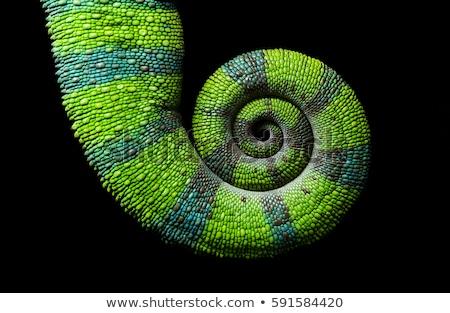 Chameleon ogon zielone tle funny Zdjęcia stock © IMaster