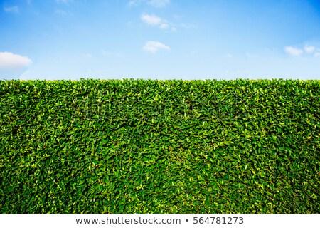 緑 青空 ジューシー パーフェクト も ストックフォト © filmstroem