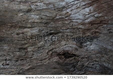 drzewo · zielona · trawa · kwiaty · zielone · łące · lata - zdjęcia stock © witthaya