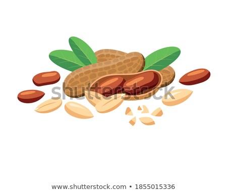 dried peanuts with leaves stock photo © masha