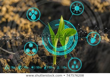 Kukoricamező palánták mező kukorica tavasz mély Stock fotó © Gordo25