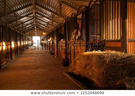 poney · écurie · portrait · brun · Homme · lumière - photo stock © val_th