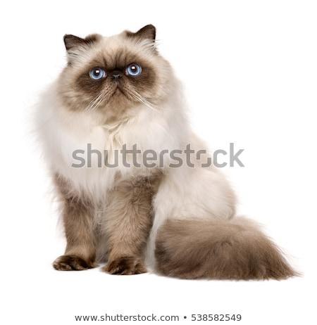 Küçük kedi yavrusu beyaz arka plan komik genç Stok fotoğraf © EwaStudio