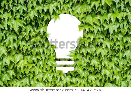 Impressionante folha verde reflexões espelho isolado branco Foto stock © vavlt