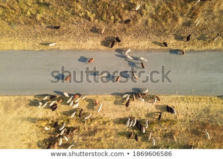 livestock migration Stock photo © ArenaCreative
