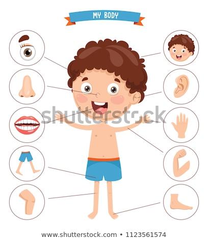 Fül testrész illusztráció emberi öt rajz Stock fotó © Krisdog