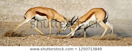 safari · park · Namibya · su · hayvan · oyun - stok fotoğraf © dirkr
