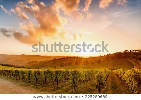 Grape valley in sunset Stock photo © Anna_Om