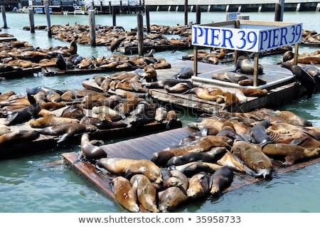 Sea lions at Pier 39 Panorama Stock photo © weltreisendertj