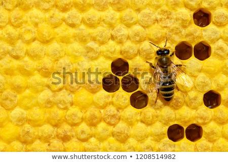 vliegen · honing · bijen · kleur · bijenkorf · man - stockfoto © kokimk