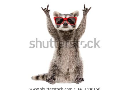 cute · wasbeer · blij · gezicht · illustratie · glimlach · gelukkig - stockfoto © anbuch