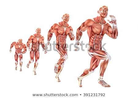 3d illusztráció férfi anatómia izolált vágási körvonal férfi Stock fotó © Kirill_M
