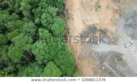 alsónadrágok · erdő · völgy · fa · fa · munka - stock fotó © chris2766
