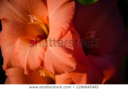 Güneydoğu asya beyaz çiçek doğa gece yağ Stok fotoğraf © bdspn