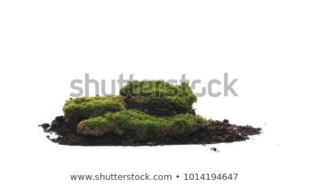Kuru yeşil ot zemin yosun çim Stok fotoğraf © tashatuvango