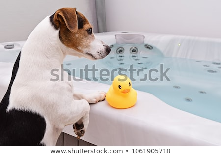Stockfoto: Jack Russell Terrier And Blue Plastic Toy