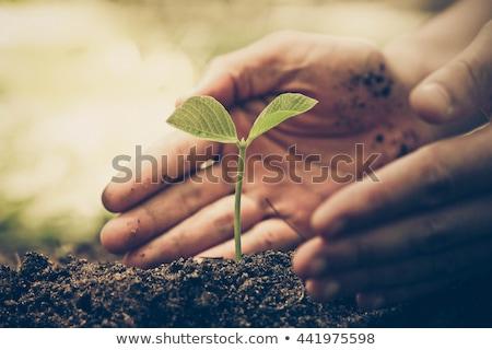 Natuurlijke zorg groeiend zoals bloemen zwarte Stockfoto © tilo