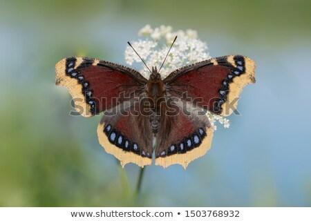 Bellezza primavera farfalla verde bella bug Foto d'archivio © t3rmiit