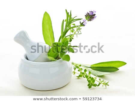 White ceramic mortar and pestle with rosemary Stock photo © gavran333