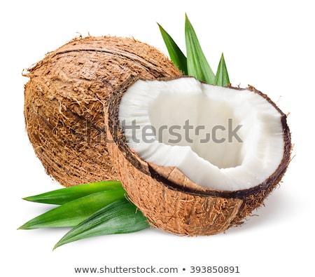 Kokosnoten bladeren witte boom natuur blad Stockfoto © Masha