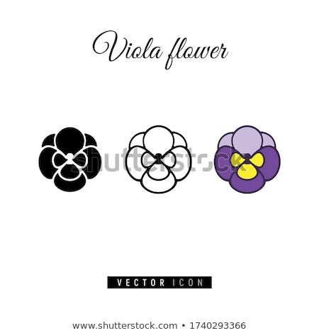 знак фиолетовый вектор икона дизайна цифровой графических Сток-фото © rizwanali3d