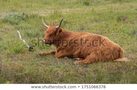Szarvas vad Hollandia tájkép mezőgazdaság férfi Stock fotó © compuinfoto