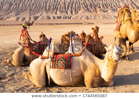 camelos · Marrocos · deserto · areia · céu - foto stock © johnnychaos