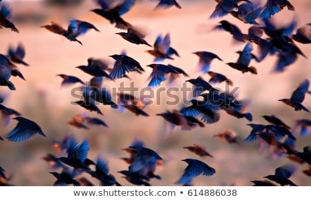 birds flying into a bright orange sunset Stock photo © morrbyte