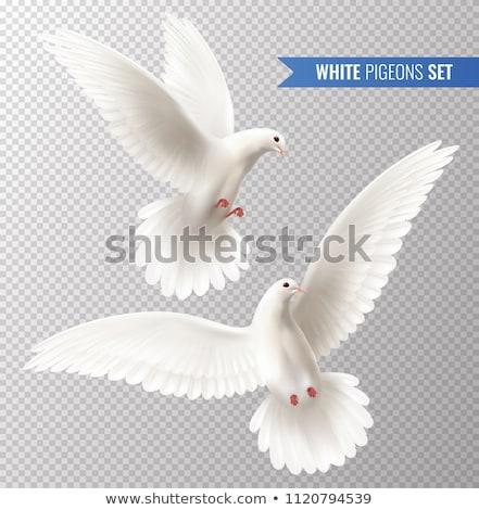 vektor · fehér · galamb · ág · épület · levél - stock fotó © lilac