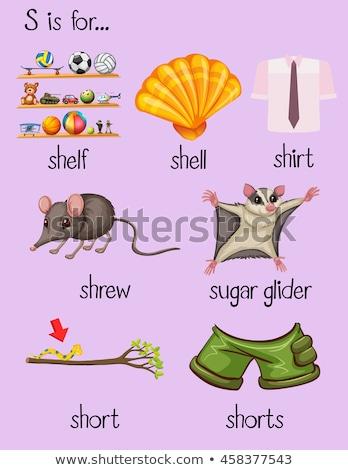 Flashcard alphabet S is for shelf Stock photo © bluering