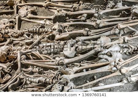 Otwarte grobu starych cmentarz tle śmierci Zdjęcia stock © amok