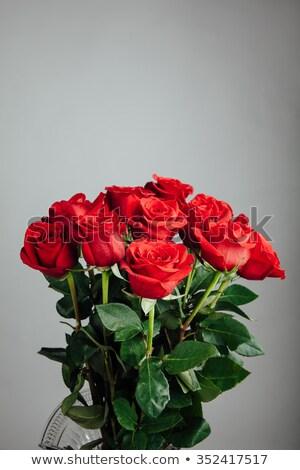 Beautiful bunch of roses on a grey background stock photo © janssenkruseproducti