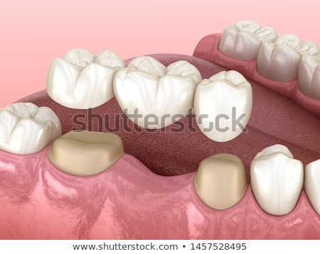 three tooth anatomy illustrations stock photo © tefi