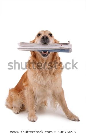 Vicces kutya újság barátságos rajz sétál Stock fotó © pcanzo