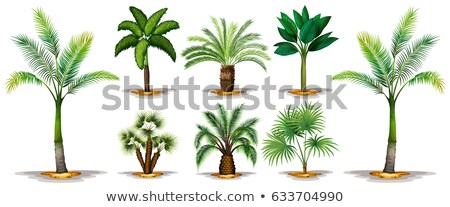 Different types of trees Stock photo © bluering