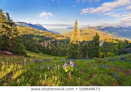 Hurrikán park hegy terjedelem naplemente hosszú Stock fotó © cboswell